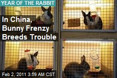 Bunny Frenzy Keeps Chinese Hopping