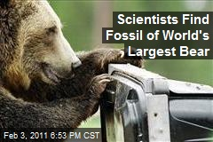 Scientists Find Fossil of World's Largest Bear