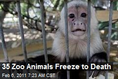 35 Animals Freeze to Death in Mexican Zoo