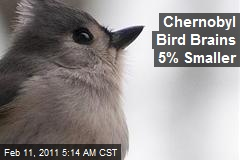 Chernobyl Bird Brains 5% Smaller