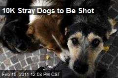 10K Stray Dogs to Be Shot