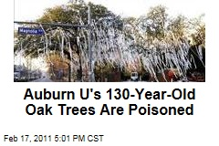 Auburn University Oak Trees at Toomers Corner Are Poisoned, and Alabama Fan Is Charged