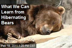 What We Can Learn from Hibernating Bears