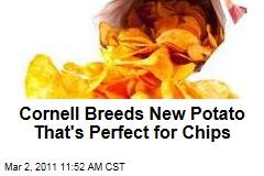Cornell's Waneta and Lamoka Potatoes: the Perfect Potato Chip Spuds?