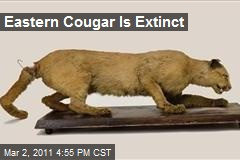 Eastern Cougar Is Extinct