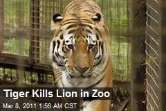 Tiger Kills Lion in Zoo