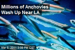 Millions of Anchovies Wash Up Near LA