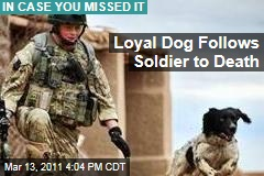 Loyal Dog Follows Soldier to Death