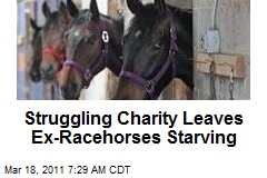 Struggling Charity Leaves Ex-Racehorses Starving