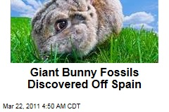 Nuralagus Rex: Biggest-Ever Bunny Fossils Discovered Off Spain