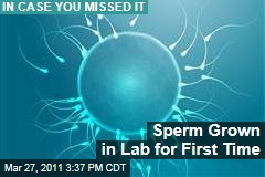 Scientists Grow Sperm From Mice in Laboratory for First Time