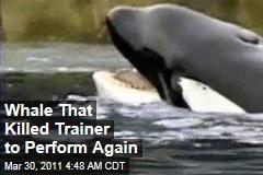 SeaWorld's Trainer-Killing Whale Tilikum to Perform Again
