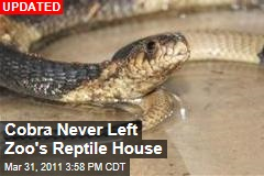 Bronx Zoo Finds Missing Cobra Curled Up Inside Its Reptile House
