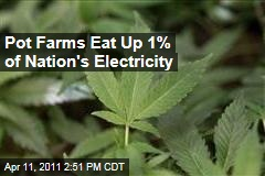 Marijuana Farms Eat Up 1% of America's Electricity