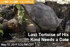 Rare Galapagos Pinta Tortoise, Lonesome George, Seeks Mate