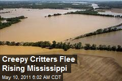 Creepy Critters Flee Rising Mississippi