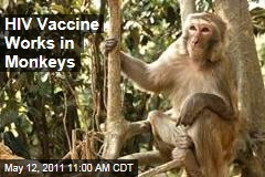 AIDS Research: HIV Vaccine Works in Monkeys