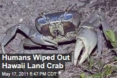Hawaii Land Crabs Vanished About the Same Time Human Settlers Arrived