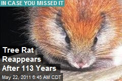 Tree Rat Reappears After 113 Years