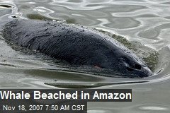 Whale Beached in Amazon