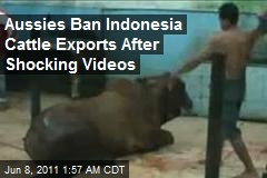 Aussies Ban Cattle Exports to 'Cruel' Indonesia