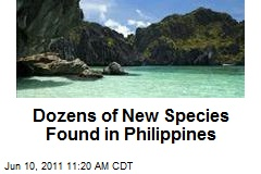 Dozens of New Species Found in Philippines