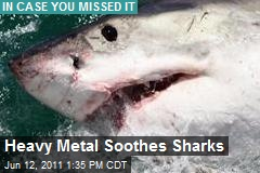 Heavy Metal Soothes Sharks