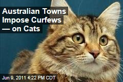 Australian Towns Create Cat Curfew to Prevent Attacks on Wildlife