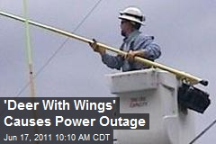 'Deer With Wings' Causes Power Outage