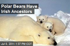 Polar Bears Have Irish Ancestors
