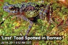 Bornean Rainbow Toad Found By Malaysian Researchers: First Sighting Since 1924