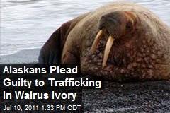Alaskans Plead Guilty to Trafficking in Walrus Ivory