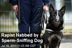 Rapist Nabbed by Sperm-Sniffing Dog