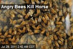 Angry Bees Kill Horse