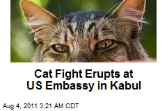 Cat Fight Erupts in US Kabul Embassy