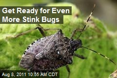 Get Ready for Even More Stink Bugs