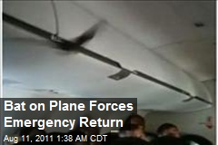 Bat on a Plane Forces Emergency Return