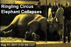 Ringling Circus Elephant Collapses