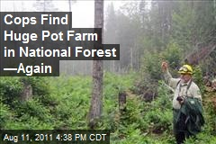Cops Find Huge Pot Farm in National Forest —Again