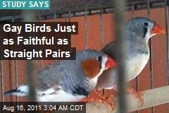 Gay Birds Just as Faithful as Straight Pairs