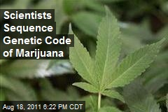 Scientists Sequence Genetic Code of Marijuana