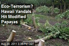 Eco-Terrorism? Hawaii Vandals Hit Modified Papayas