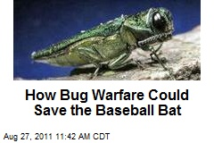 How Bug Warfare Could Save the Baseball Bat