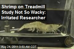 Shrimp on Treadmill Study Not So Wacky: Irritated Researcher
