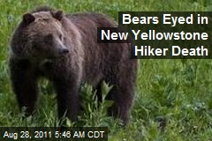 Bears Eyed in New Yellowstone Hiker Death