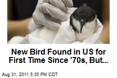 New Bird Found in US for First Time Since '70s, But...