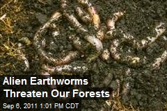 Alien Earthworms Threaten Our Forests