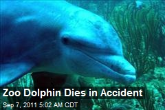 Zoo Dolphin Dies in Accident