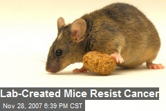 Lab-Created Mice Resist Cancer