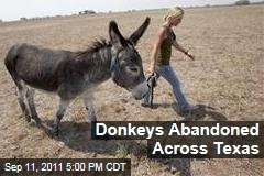 Texans Abandon Donkeys Due to Drought and Feed Costs